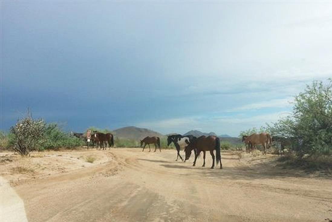 2013-07-26-from_Teresa-horses